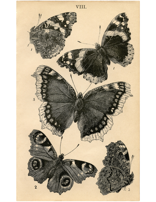 antique butterfly image