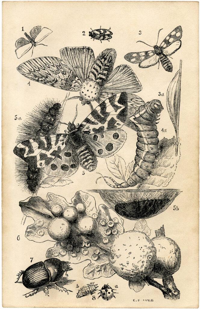 British butterflies printable image