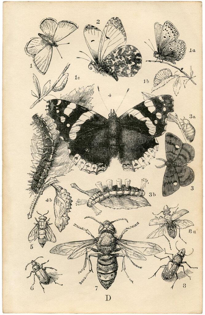 British butterfly caterpillar print illustration