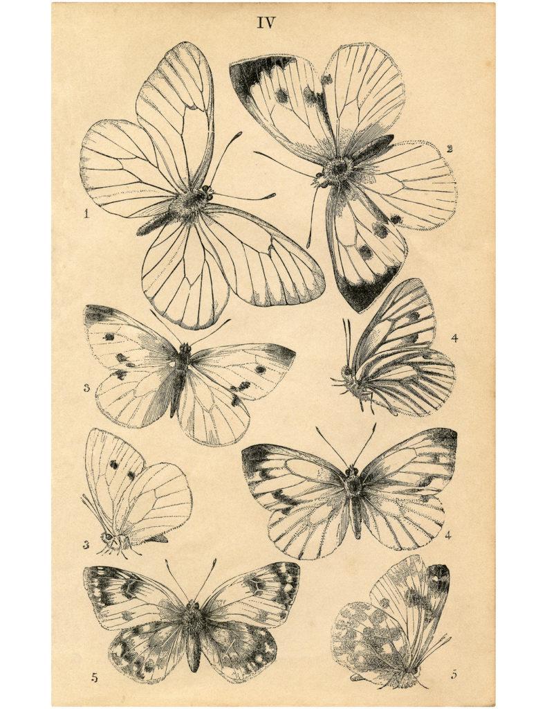 Butterflies printable clipart