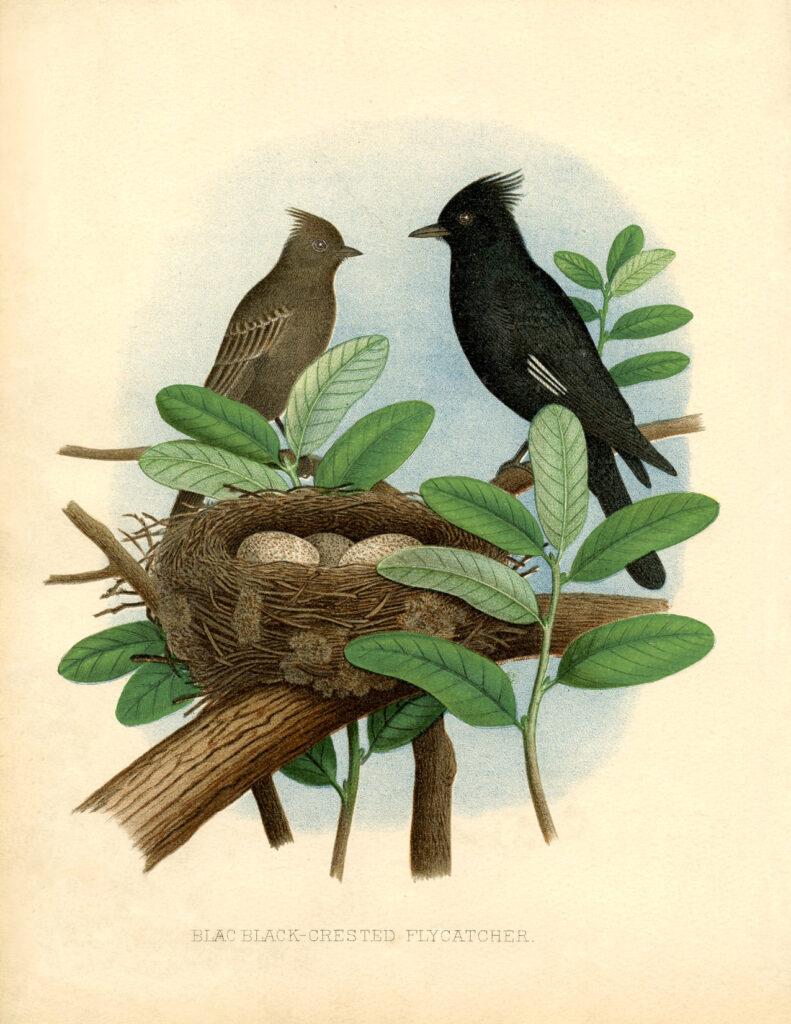 natural history birds nest image