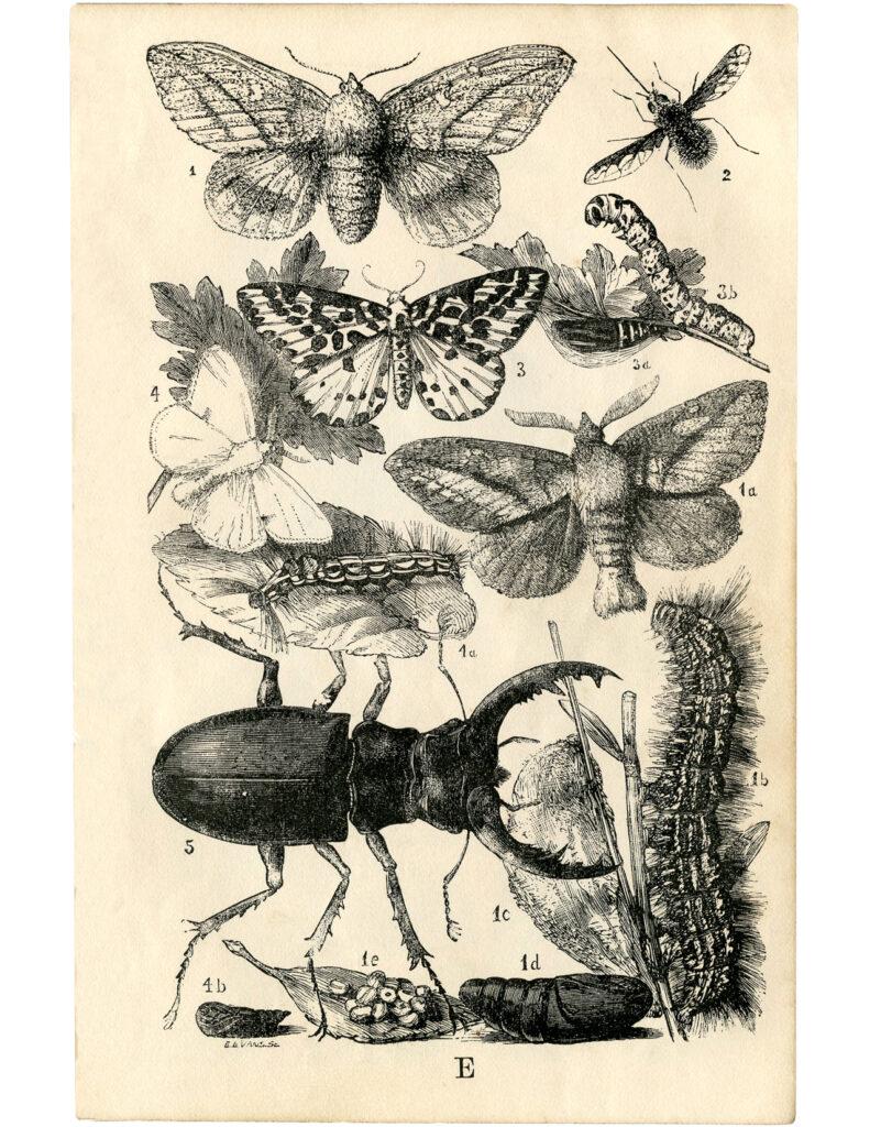 insects moths butterflies clipart