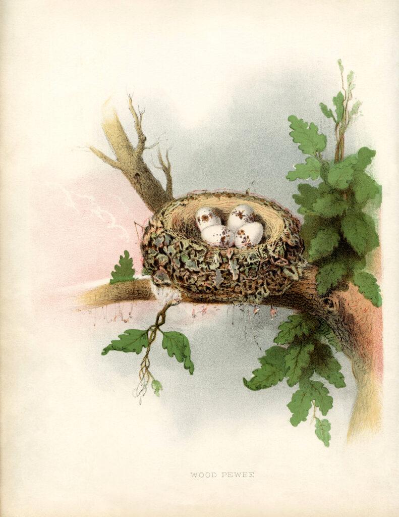 vintage nest eggs illustration