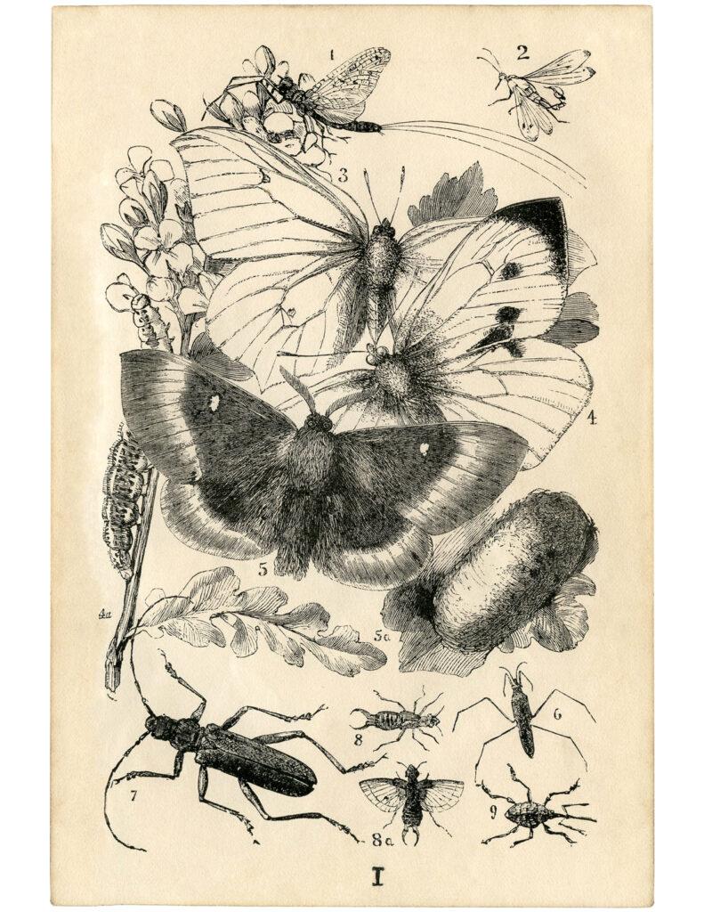 butterflies bugs wings image