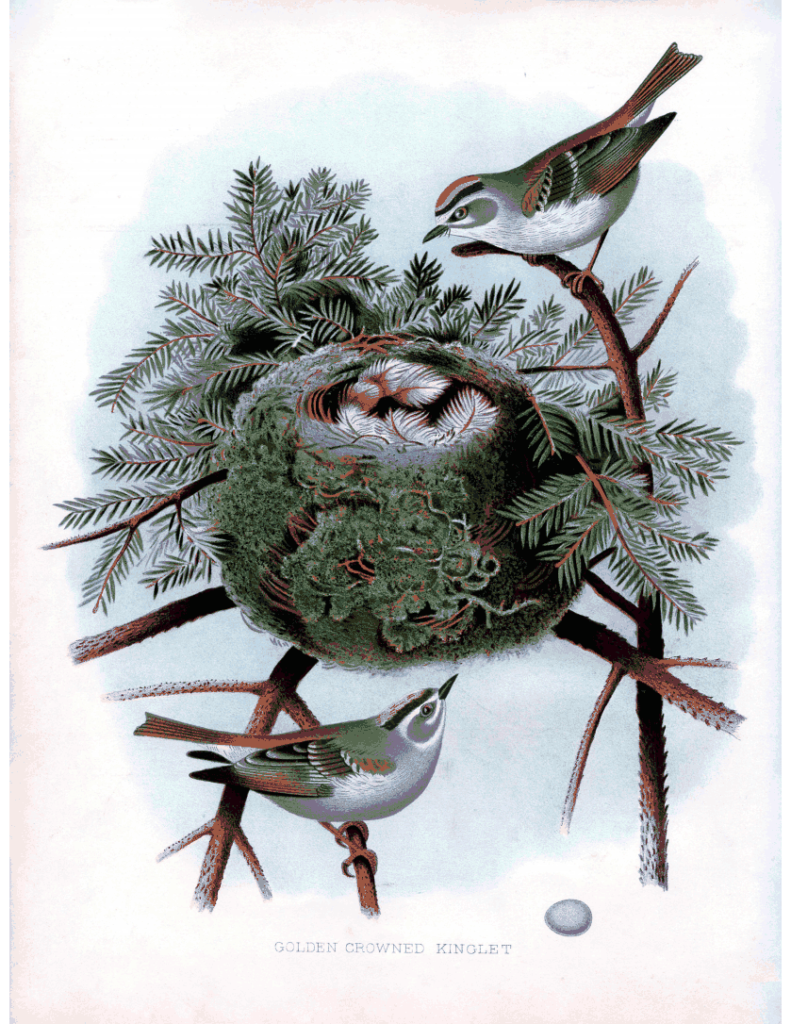 birds nest fledglings image