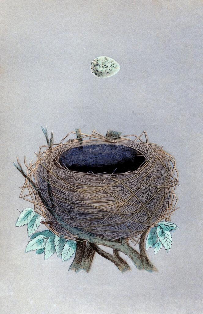 morris nest egg image