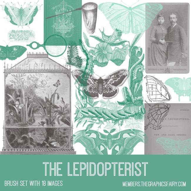vintage The Lepidopterist image brush set