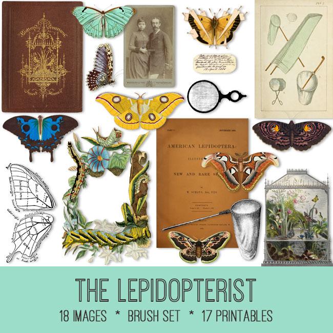 The Lepidopterist vintage images