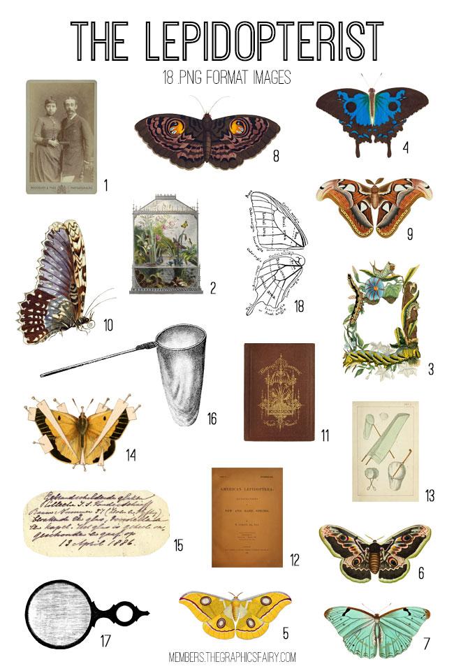 vintage The Lepidopterist ephemera digital image bundle