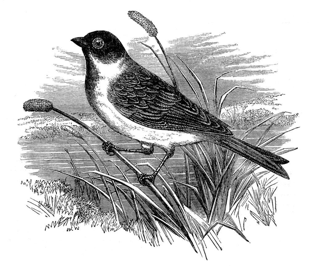 bird perched grass clipart