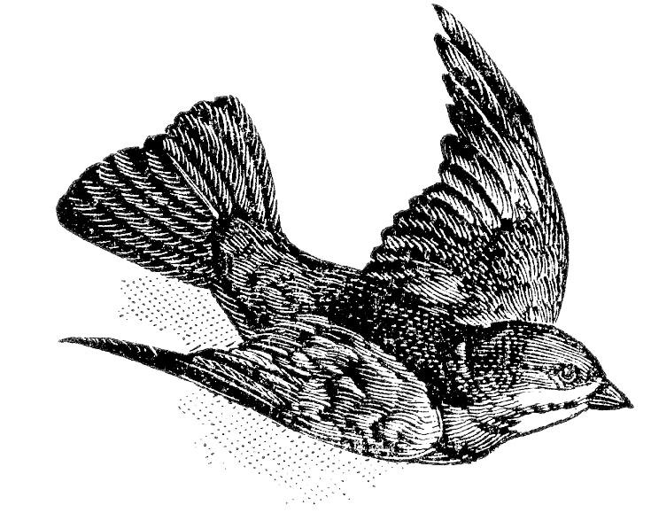 Bunting bird flying image