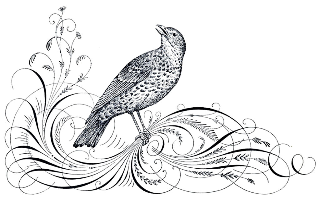 bird calligraphy flourish image