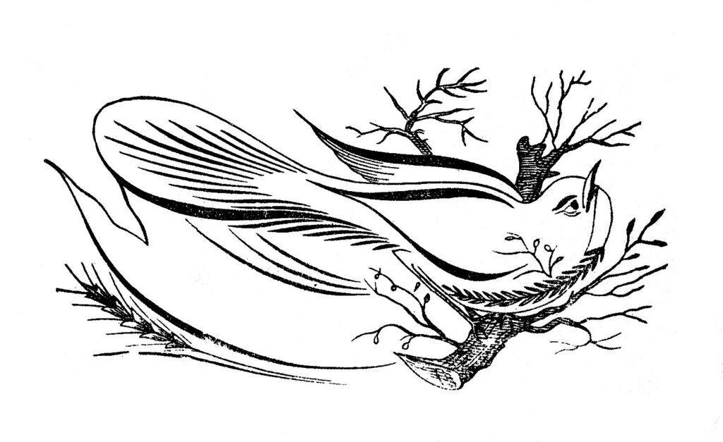 calligraphy bird twig illustration