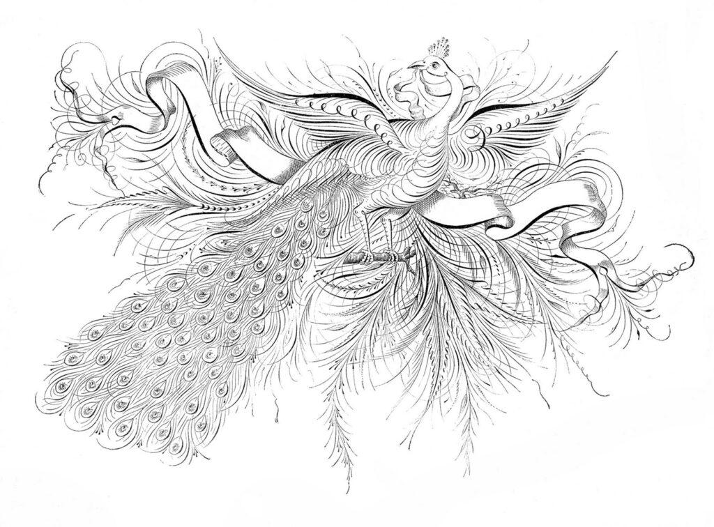 calligraphy peacock ribbon image