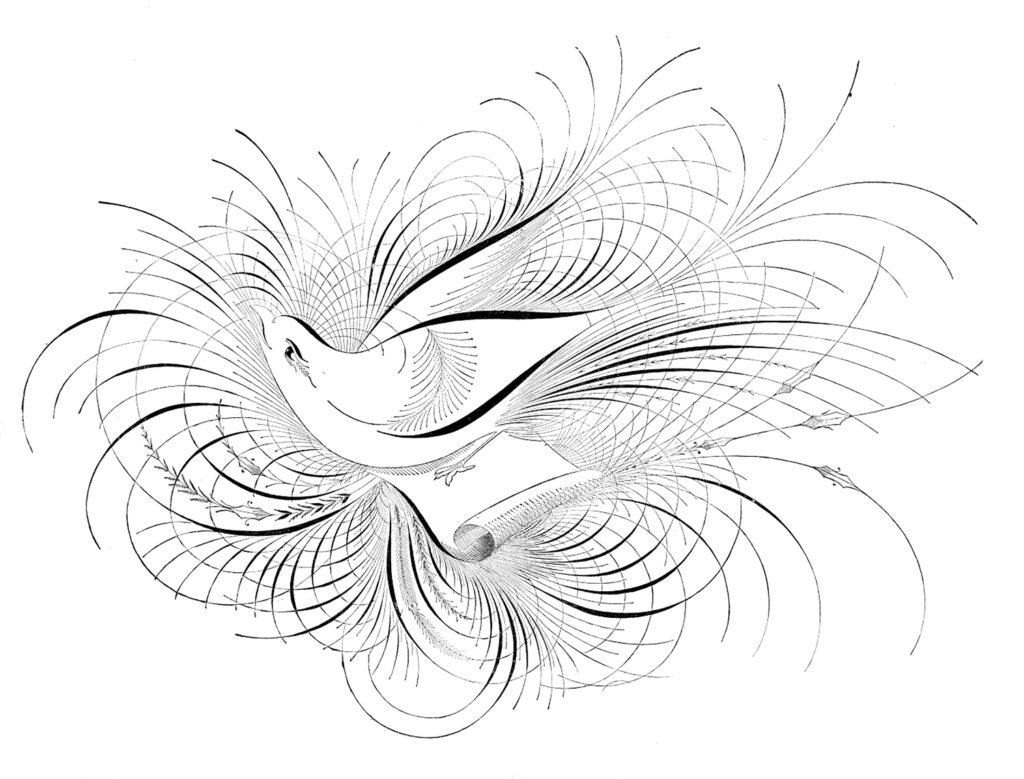 Spencerian calligraphy bird image