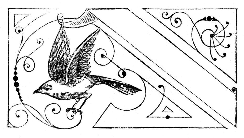 calling card bird design illustration