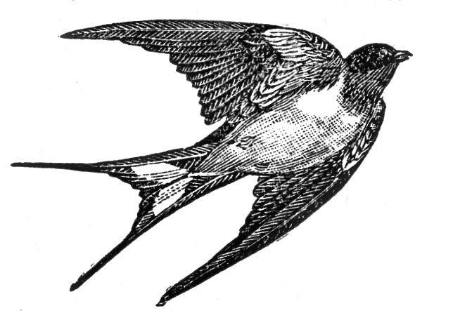 vintage bird flying clipart