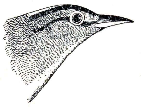 bird head clipart