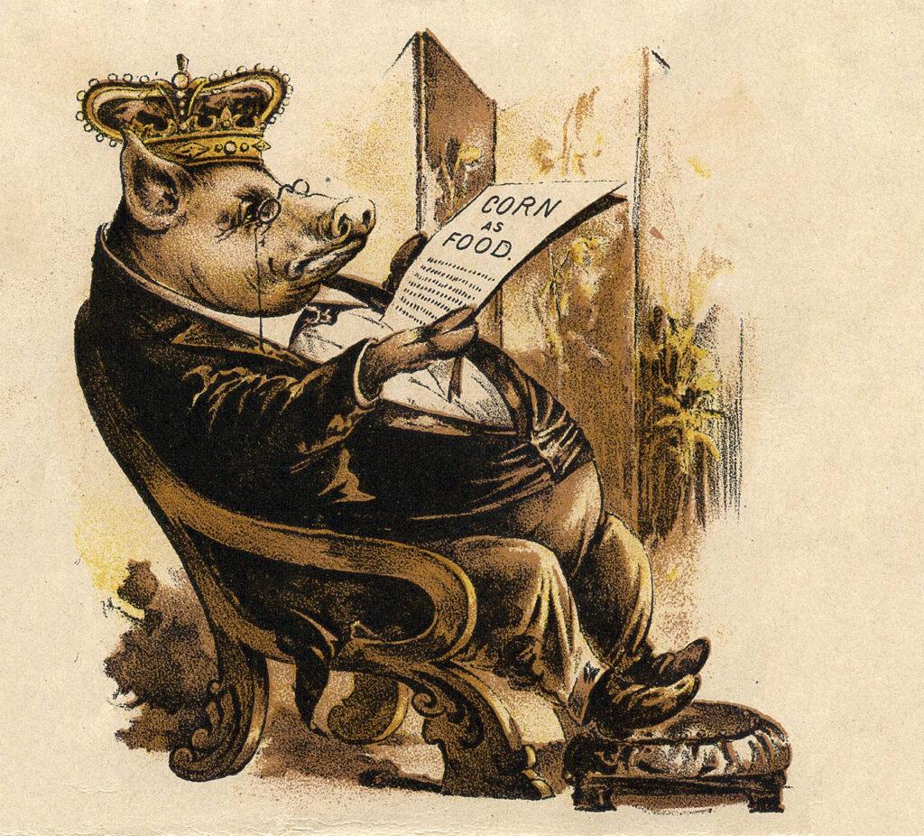 crown pig advertising image