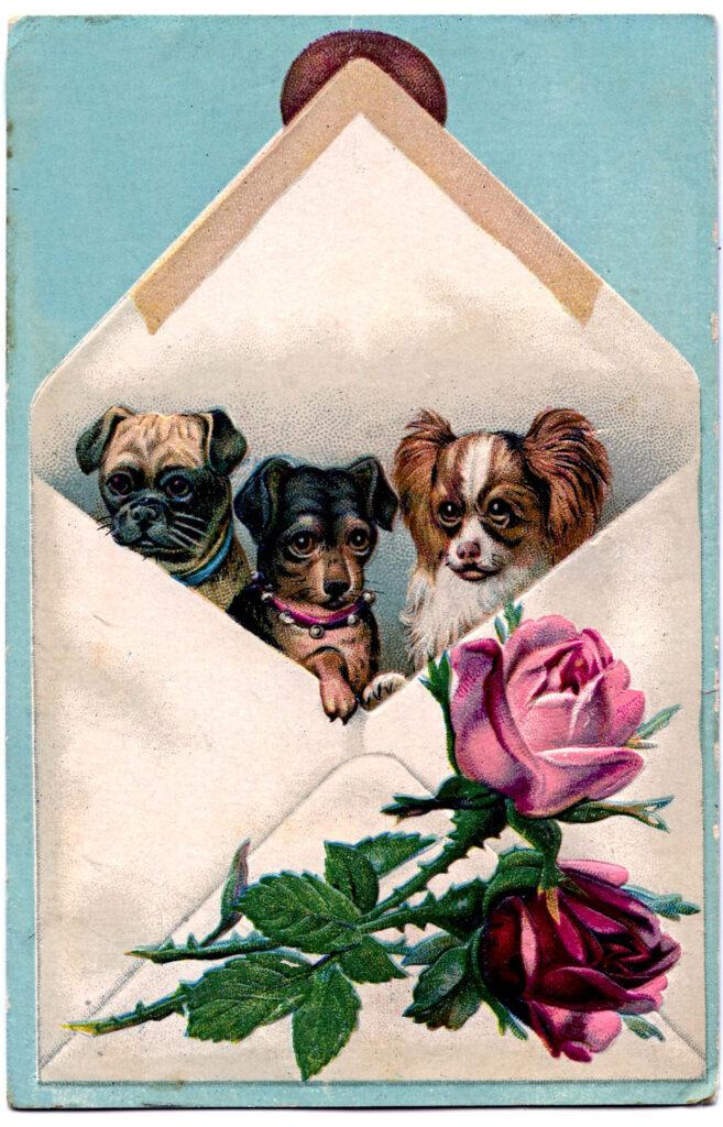 dogs envelope rose vintage illustration