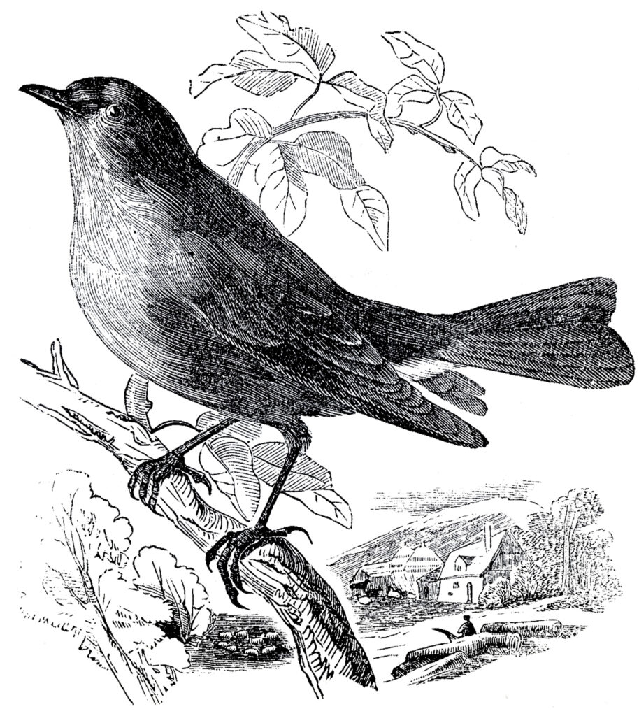 bird perched branch image
