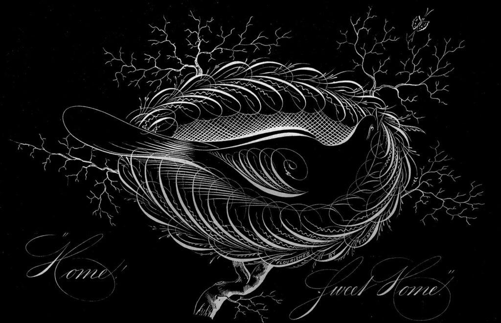 black white calligraphy bird clipart