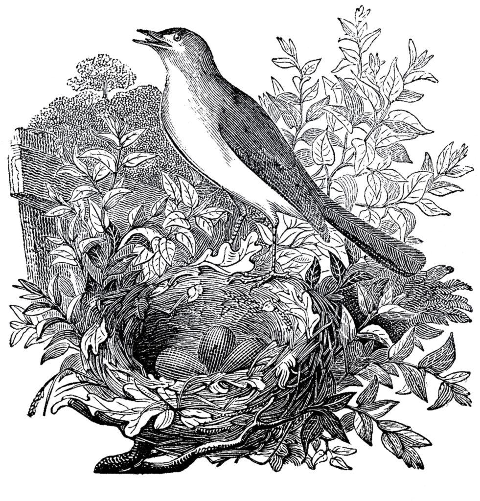 Nightingale bird nest branch illustration