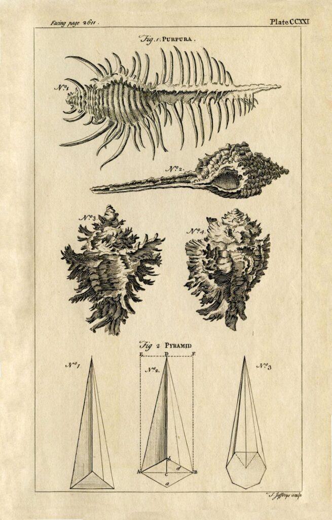 natural history vintage shells image