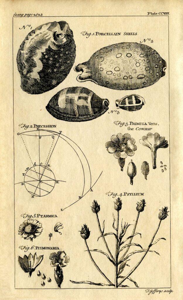 natural history vintage shell printable clipart
