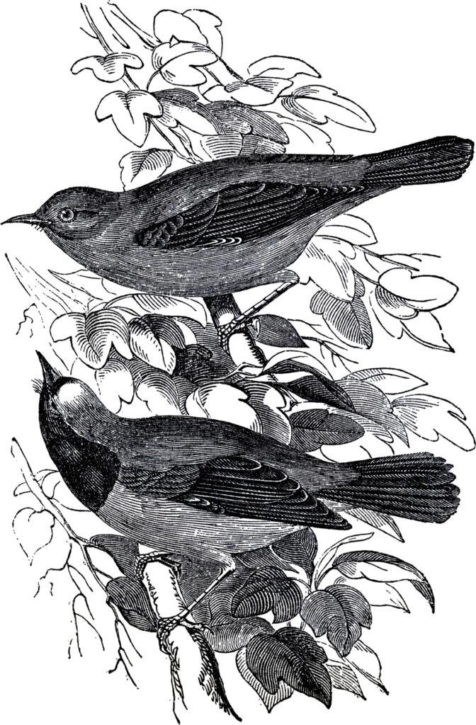 Pair birds branch image