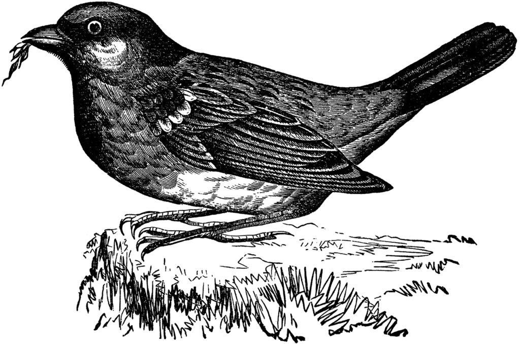 bird grass vintage image