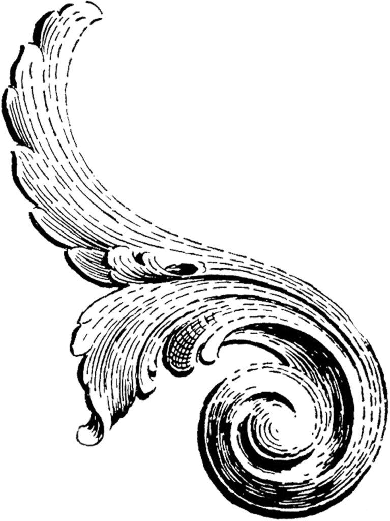 vintage scroll ornament illustration
