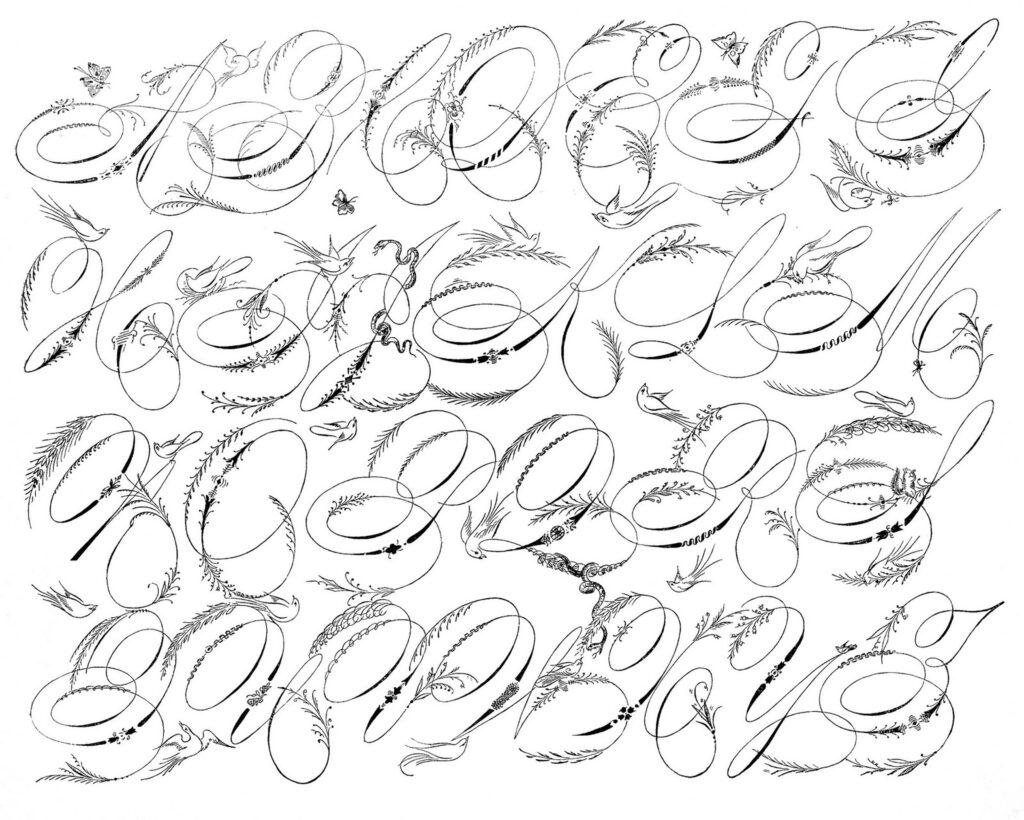 calligraphy bird alphabet image