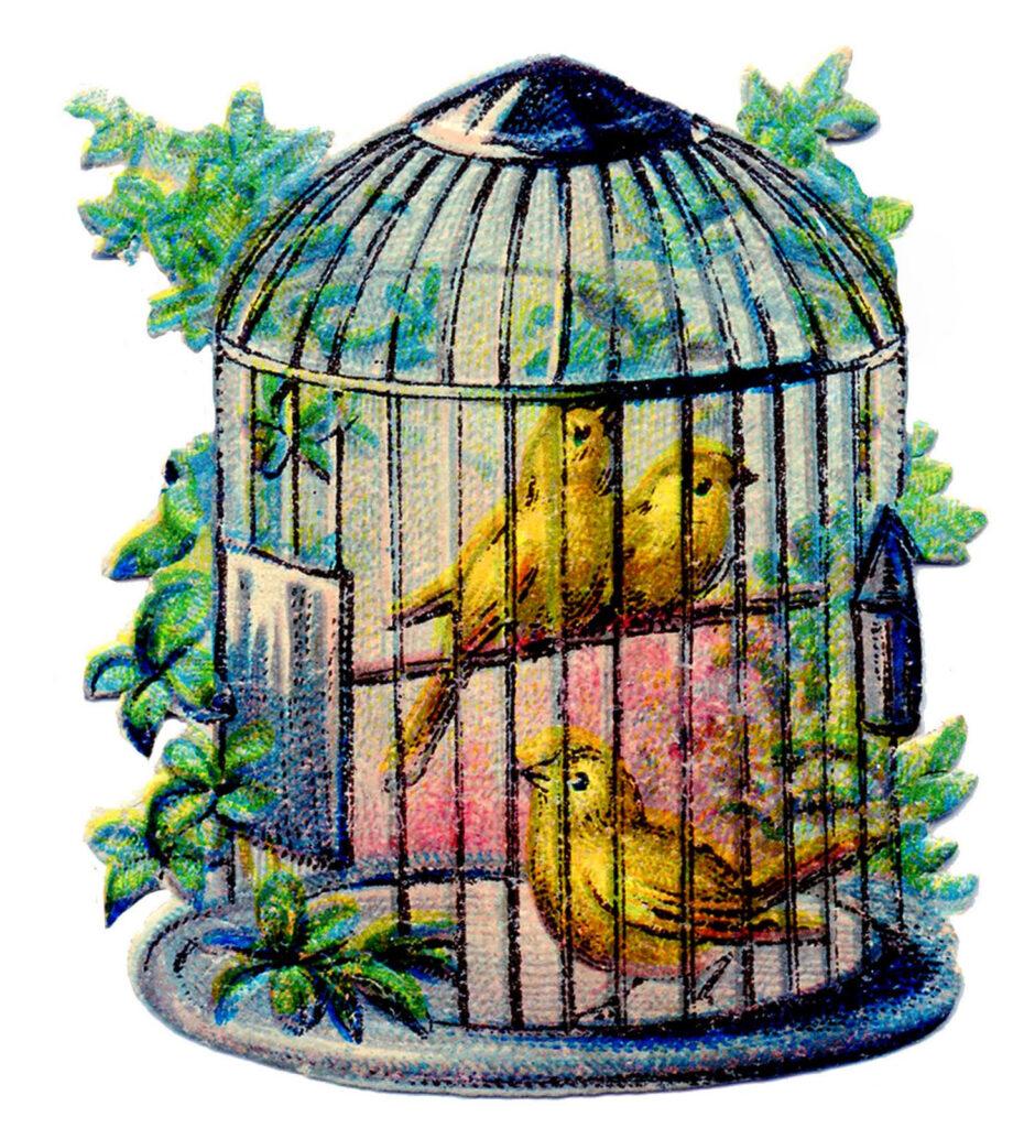 canary birdcage vintage image