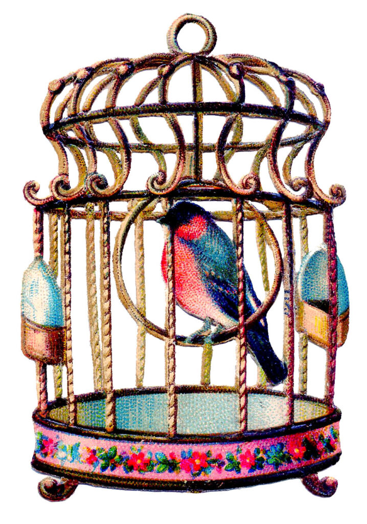 colorful bird birdcage illustration