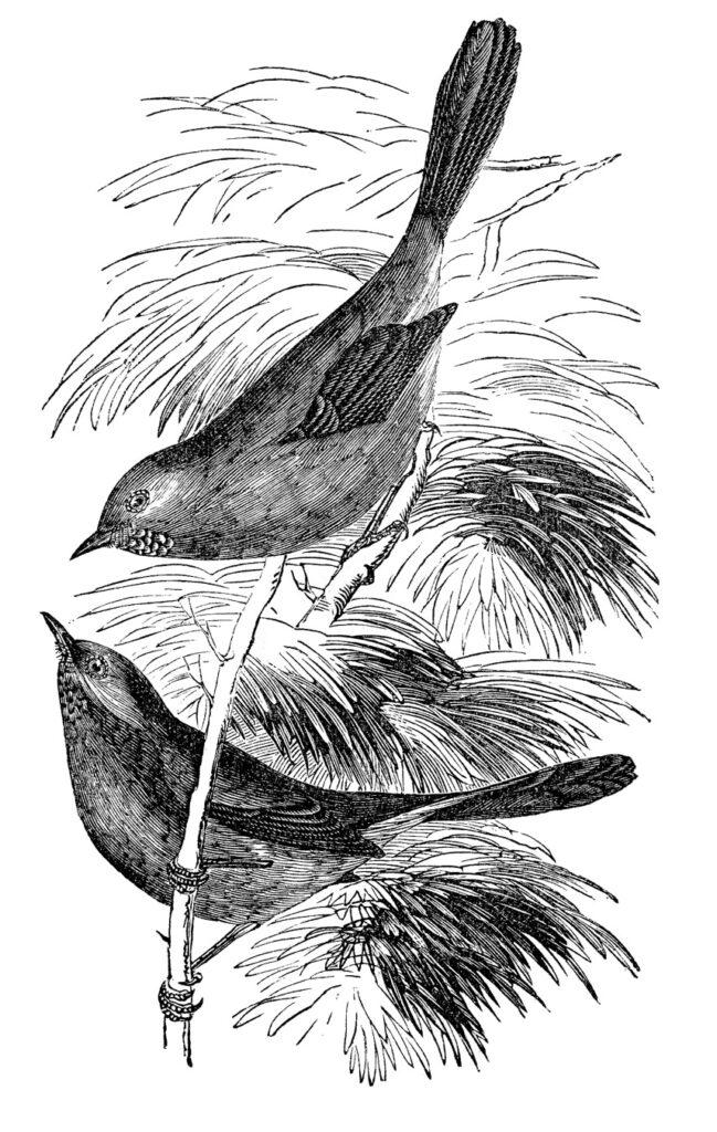 two birds evergreen image