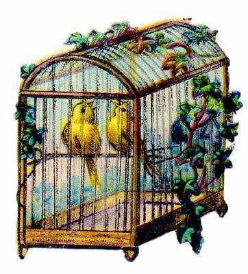 canary birdcage vintage illustration