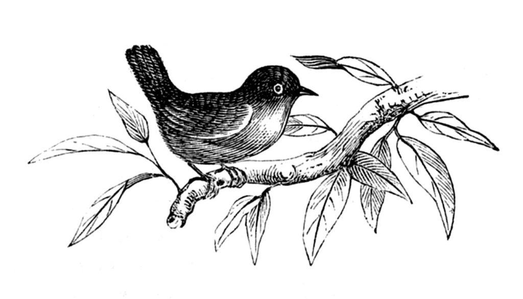 Spring bird branch leaves image
