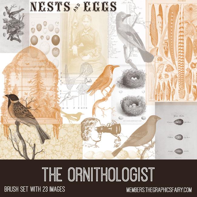 vintage the ornithologist ephemera brush set