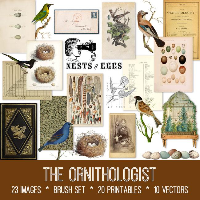 the ornithologist ephemera vintage images