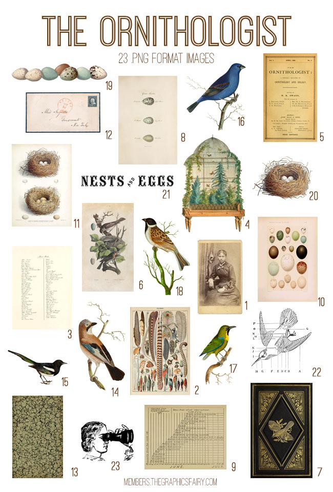 vintage the ornithologist ephemera digital image bundle