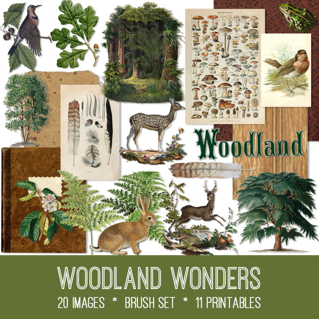 woodland wonders ephemera vintage images