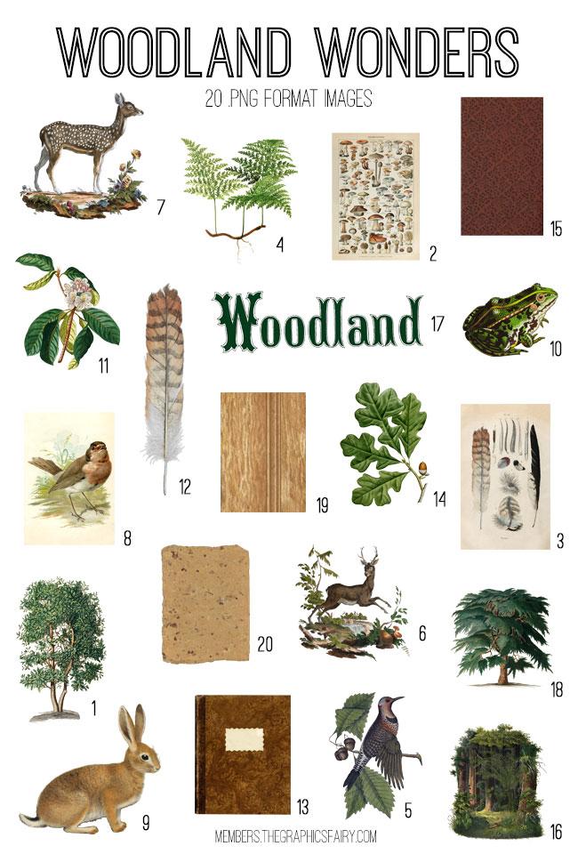 vintage woodland wonders digital image bundle