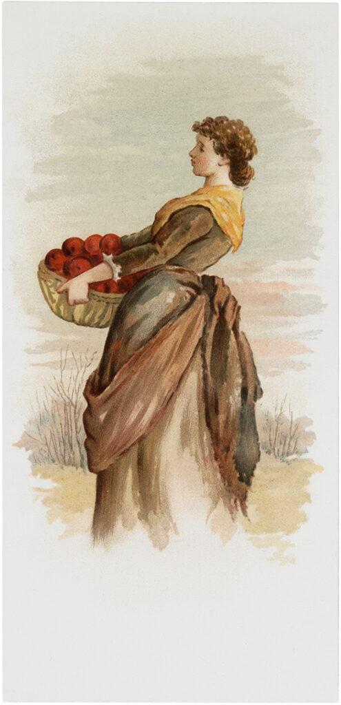 apple harvest lady illustration