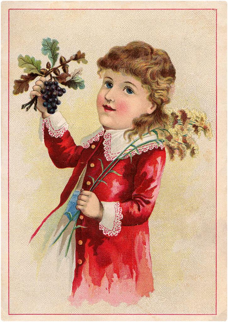 boy grape harvest illustration