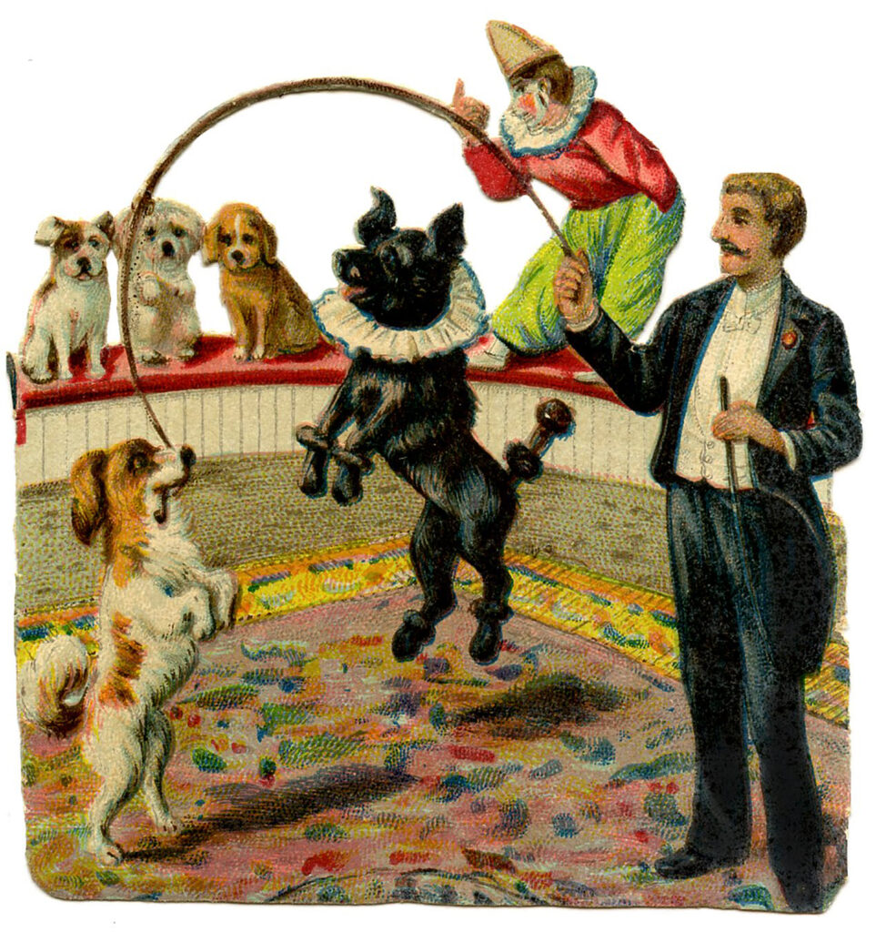 circus dogs act performer illustration