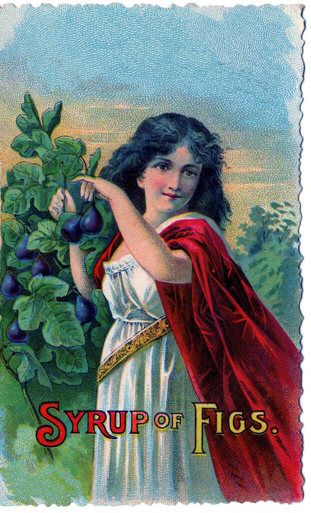vintage girl picking figs red cape illustration