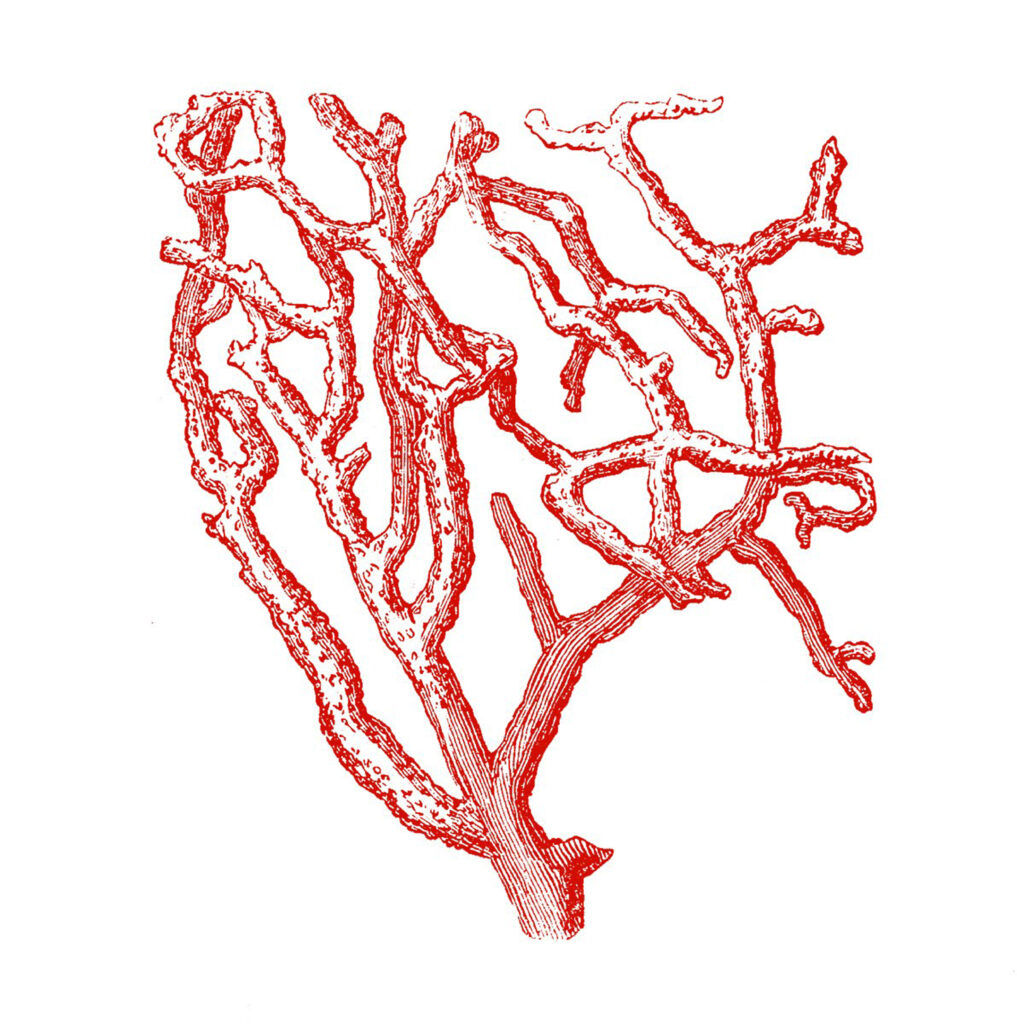 red branch coral image