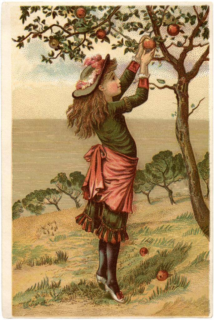 girl apple picking clipart