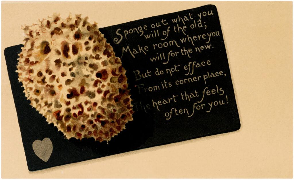 Vintage Sea Sponge image